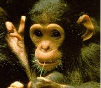 primates no humanos