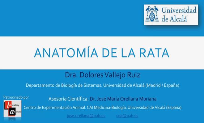 Nueva edición del Video Anatomía de la Rata de la Universidad de Alcalá
