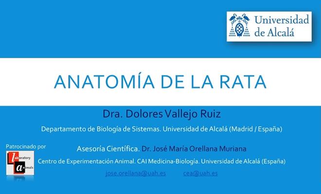 Video de la anatomía de la rata en español